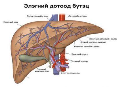 Элэгний вирусын идэвхижлийг хүнсээр анагаах нь